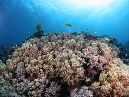 沖繩【美麗海水族館+11處自選4個景點】自由行套票 3-8天 (包pocket wifi 一部)