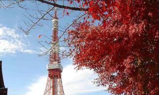東京、輕井澤、箱根【城市探索】自由行套票3-31天