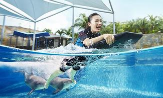 【名勝世界·海豚伴游連水上探險樂園】新加坡自由行套票3-31天