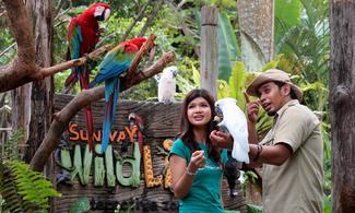 吉隆坡【Sunway Lagoon Theme Park】自由行套票3-31天