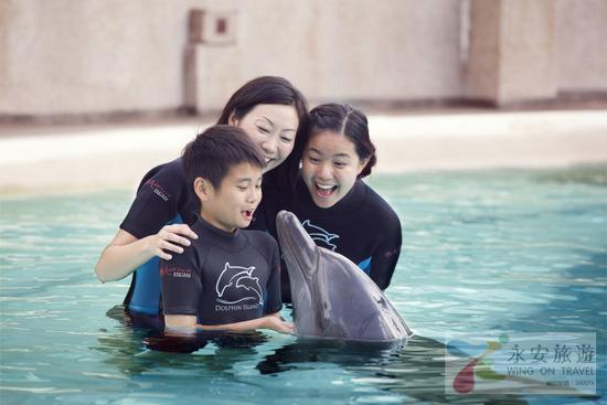 【炎夏玩水】海豚全接觸 - 海豚探索連水上探險樂園門票 │新加坡自由行套票3-31天