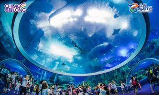 【Fun‧紛樂園】鯨鯊到底有幾大?!│長隆主題酒店+門票.2人同行│金光飛航│珠海自由行套票2-7天~『來回澳門氹仔碼頭 』