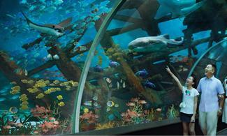 【Fun ‧ 紛樂園】新加坡環球影城™及S.E.A.海洋館™ 新加坡自由行套票3-31天