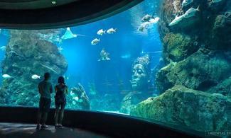 【暹羅海底世界】曼谷自由行套票3-31天(包水族館入場門票)
