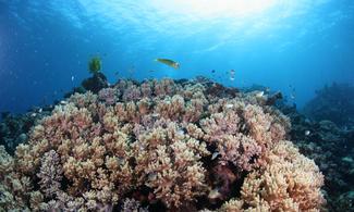 【食玩瞓】美麗海水族館+11處自選4個景點門票│包pocket wifi租借服務│沖繩自由行套票 3-31天