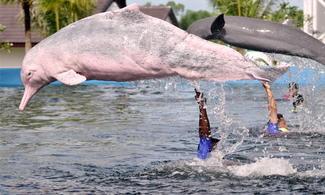芭堤雅【海豚世界】自由行套票3-31天(包入場門票一張連海豚表演、坐馬車、ATV越野四驅車及泰式飲品一杯) (最少4人同行)