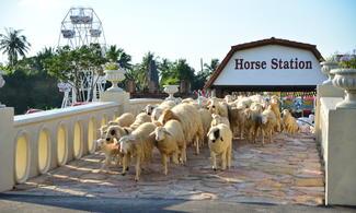 【瑞士小綿羊牧場】七岩/華欣自由行套票3-31天(包Swiss Sheep Farm入場門票)