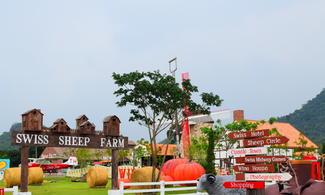 芭堤雅【瑞士小綿羊牧場】自由行套票3-31天(包Swiss Sheep Farm入場門票)