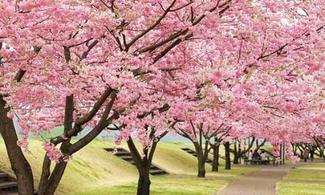 首爾【復活節】自由行套票3-31天