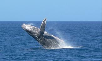 【食玩瞓】包那霸賞鯨之旅 | 沖繩自由行套票 3-31天 │ 包pocket wifi租借服務