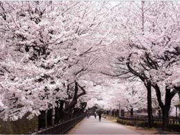 名古屋【賞櫻1日遊】自由行套票3-31天 (包pocket wifi 一部)