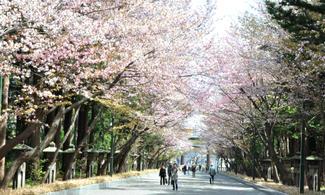札幌【住宿 x 租車】自由行套票4-31天 (附加租車選項)  (包免費pocket wifi租借服務)