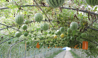 【暑假 ‧ 親親大自然】首爾自由行套票3-31天(包摘水果及坐農夫車)