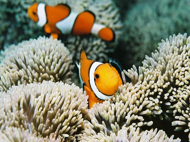【炎夏玩水】跟可愛的海洋生物一起浮潛吧│包pocket wifi租借服務│沖繩自由行套票 3-31天