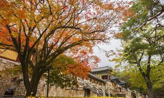 【賞楓之旅】釜山自由行套票3-31天 (包慶州賞楓葉 專車一天團)
