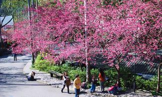 【愛 ‧ 賞花】 包大板根森林遊園門票、午或晚餐及露天溫泉SPA│台北自由行套票3-31天