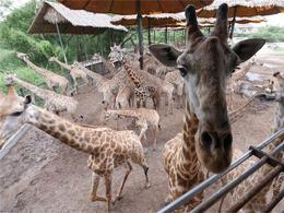 【Fun ‧ 紛樂園】│ 包野生動物園 (動物園+海洋公園) 連自助午餐│ 曼谷自由行套票3-31天