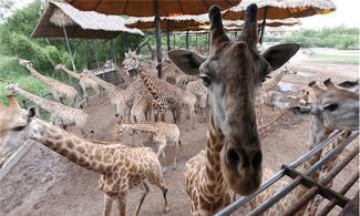 【Fun ‧ 紛樂園】動物全接觸!│包野生動物園 (動物園+海洋公園) 連自助午餐│ 曼谷自由行套票3-31天