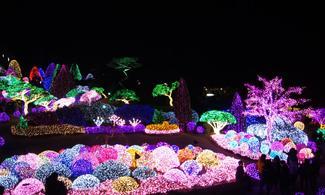 【地道遊】包士多啤梨園+九曲冰川瀑布+晨靜樹木園夜燈節一天團│首爾自由行套票3-31天
