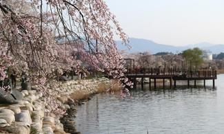 【愛 ‧ 賞花】包江陵鏡浦湖櫻花慶典一天團 | 首爾自由行套票3-31天