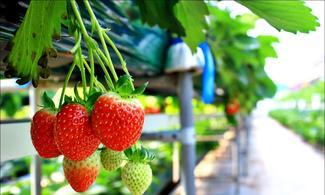 【地道遊】包京畿道摘草莓+童話瑞士村+夜遊晨靜樹木園 │首爾自由行套票3-31天