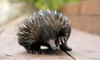 【食玩瞓】包Sydney Taronga Zoo 門票連纜車 | 悉尼自由行套票4-31天