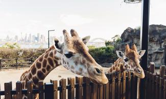 【食玩瞓】擁有約4000隻來自澳洲和世界各地的動物園 | 悉尼自由行套票4-31天