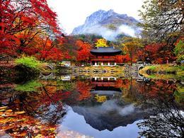 【愛 ‧ 紅葉】包內藏山紅葉鑑賞。千年內藏寺一天遊 │首爾自由行套票3-31天