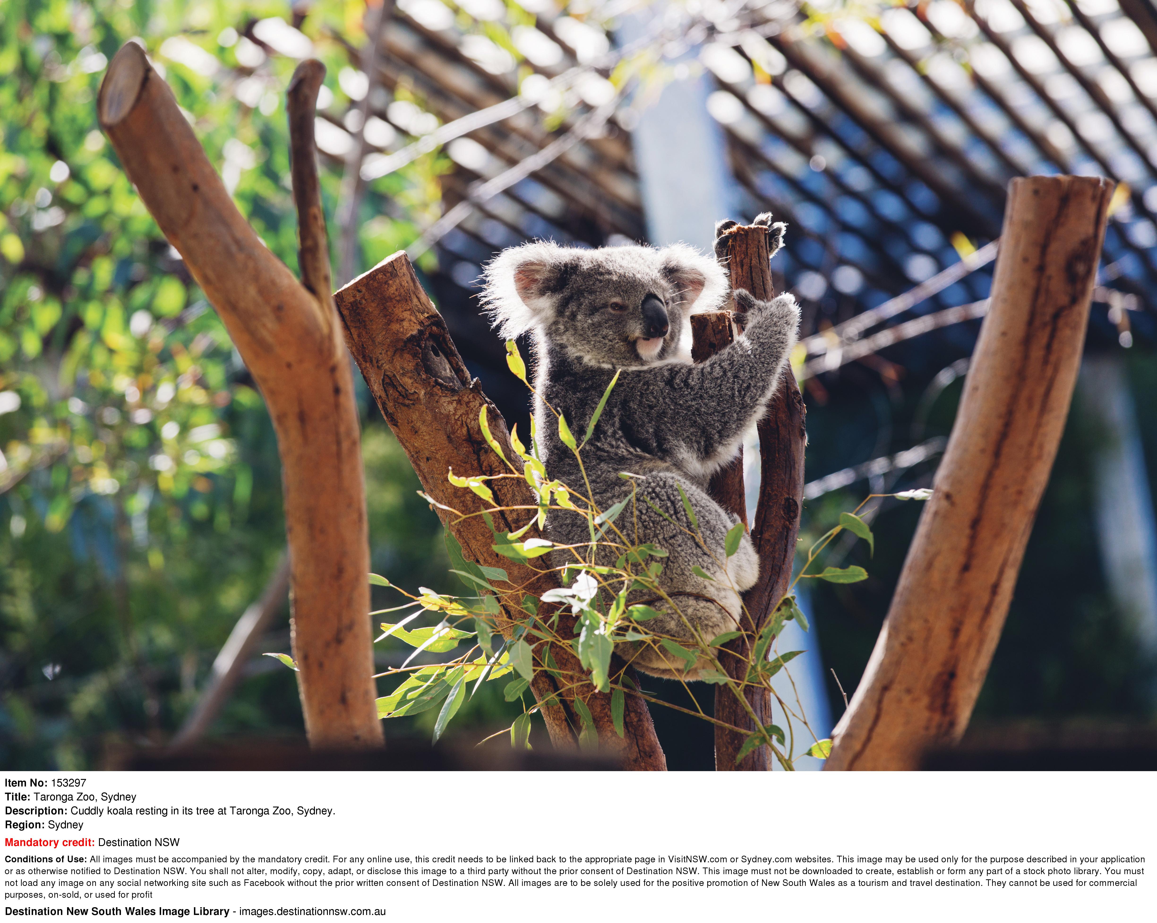 【食玩瞓】包Sydney Taronga Zoo 門票連纜車 | 國泰航空悉尼自由行套票4-31天