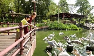 【主題玩樂】雀鳥大集合!林子大,什麼鳥都有 │新加坡自由行套票3-31天