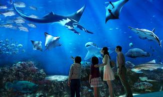 【主題玩樂】探索奇妙的海洋世界 │聖淘沙名勝世界 - S.E.A. 海洋館│新加坡自由行套票3-31天
