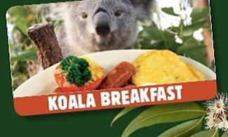 【食玩瞓】卡娃依呢!和樹熊一齊食早餐 | 悉尼自由行套票4-31天
